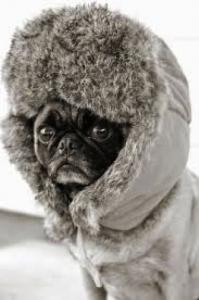1-28 Winter Pug