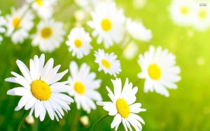 3-26 springflowers
