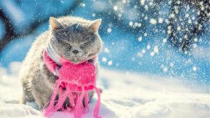 Winter Clothing Tips eCampus