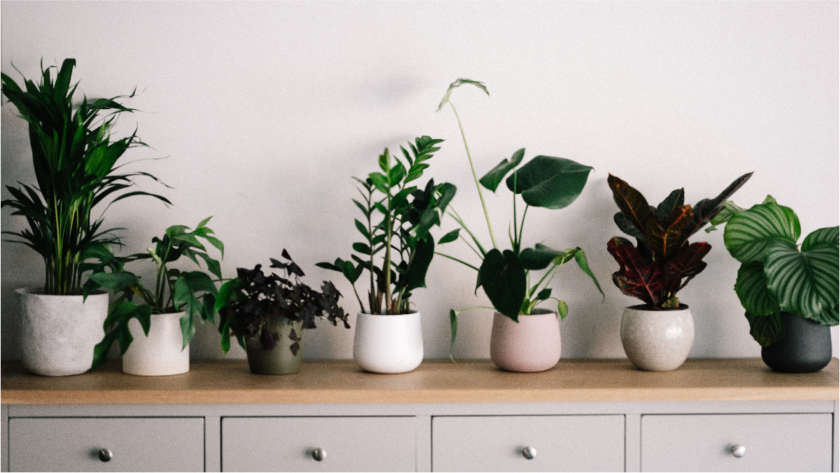 Best Dorm Room Plants